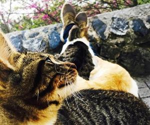 Kampüsün En Sevimli Hayvanları