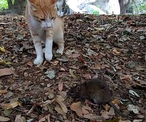 Fareden korktu kedi ???? #bogaziciunikedi #bogazinkedisi #fare #mouse #cat