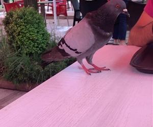Güvercin uçu verdi...