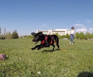 Zeytin Karadogtir'in Bilkent çimlerindeki ilk macerası ????O? -------------------------- #bilkent #bilkentuniversity #dog #doglover #gopro #finalcutpro #editing #montage #sun #grass #niceweather