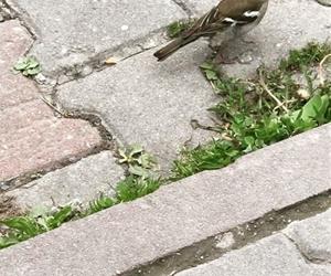 #yuvayı#dişi#kuş#yaparmış