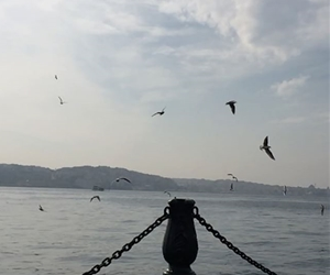 #istanbul #sea #blue #peace #peaceful #bird #birds #sky #fly #cloud #clouds #happiness #they #are #scream ??